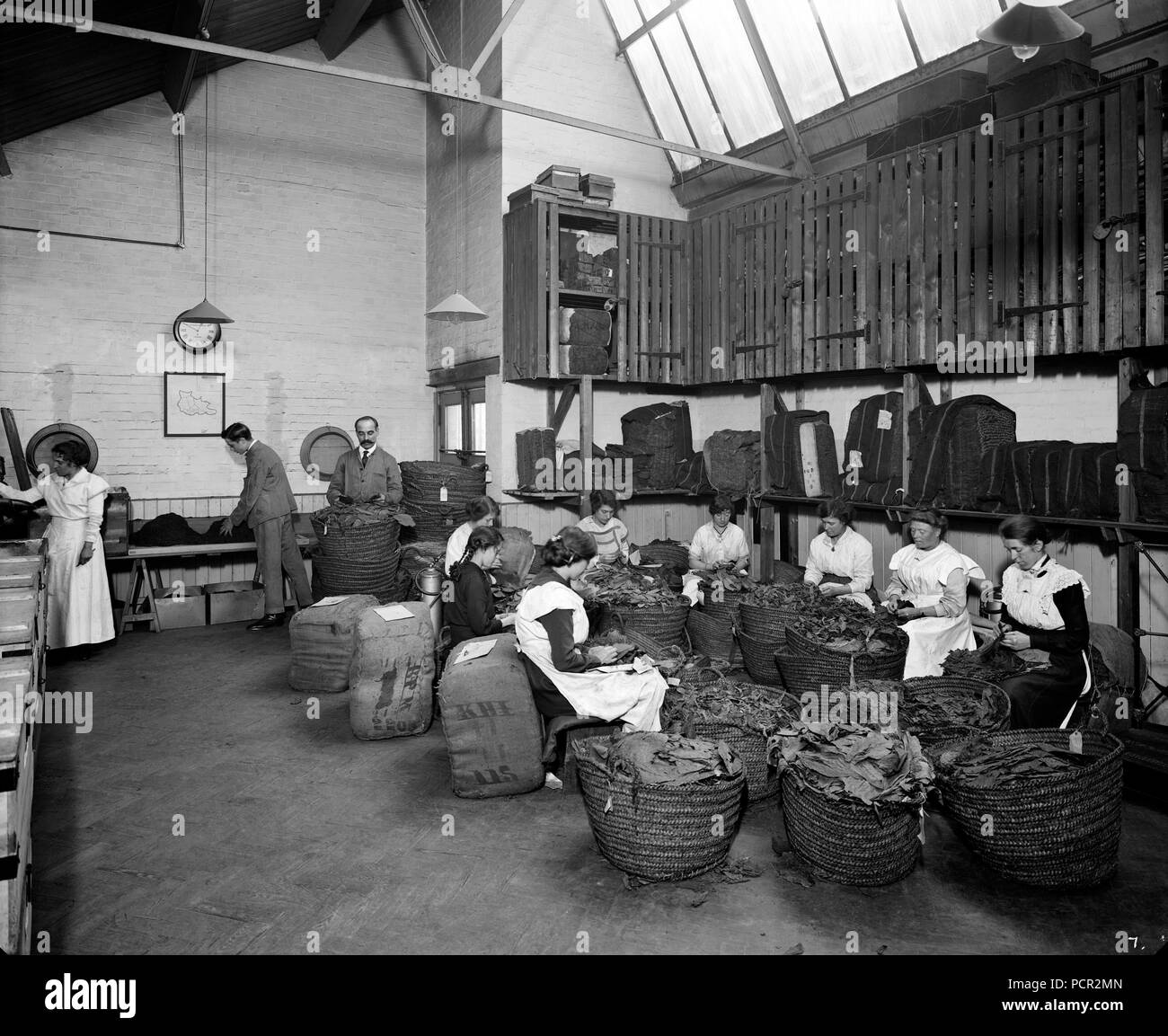 Tobacco leaf-picking in the Turkish leaf room, Teafani & Co Works, Brixton, London, 1916. Cigarettes and tobacco were regarded as vital war supplies and these women workers are contributing to the war effort by leaf-picking. - Stock Image