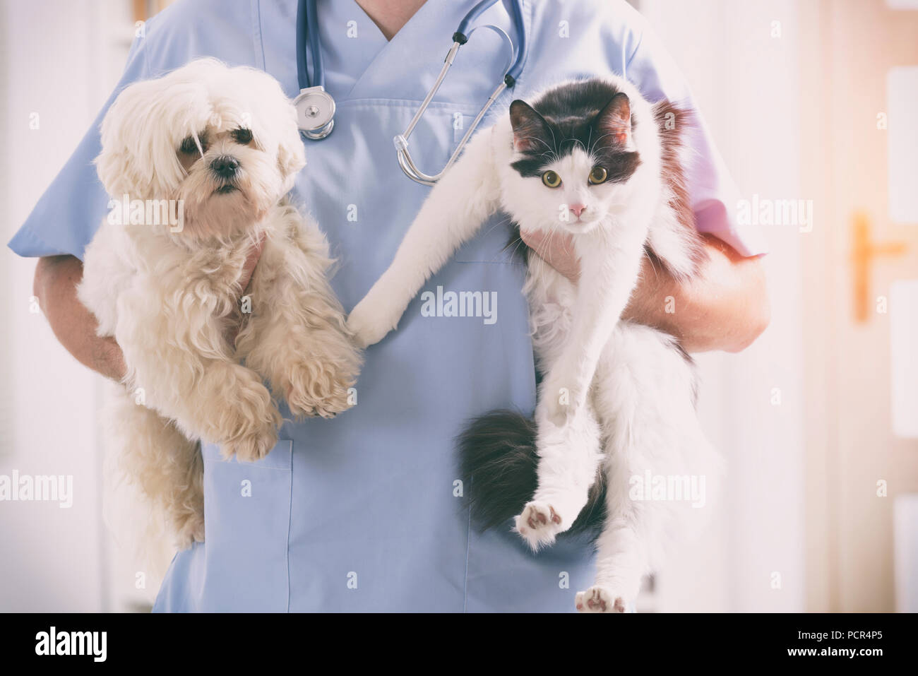 Vet with dog and cat in his hands - Stock Image