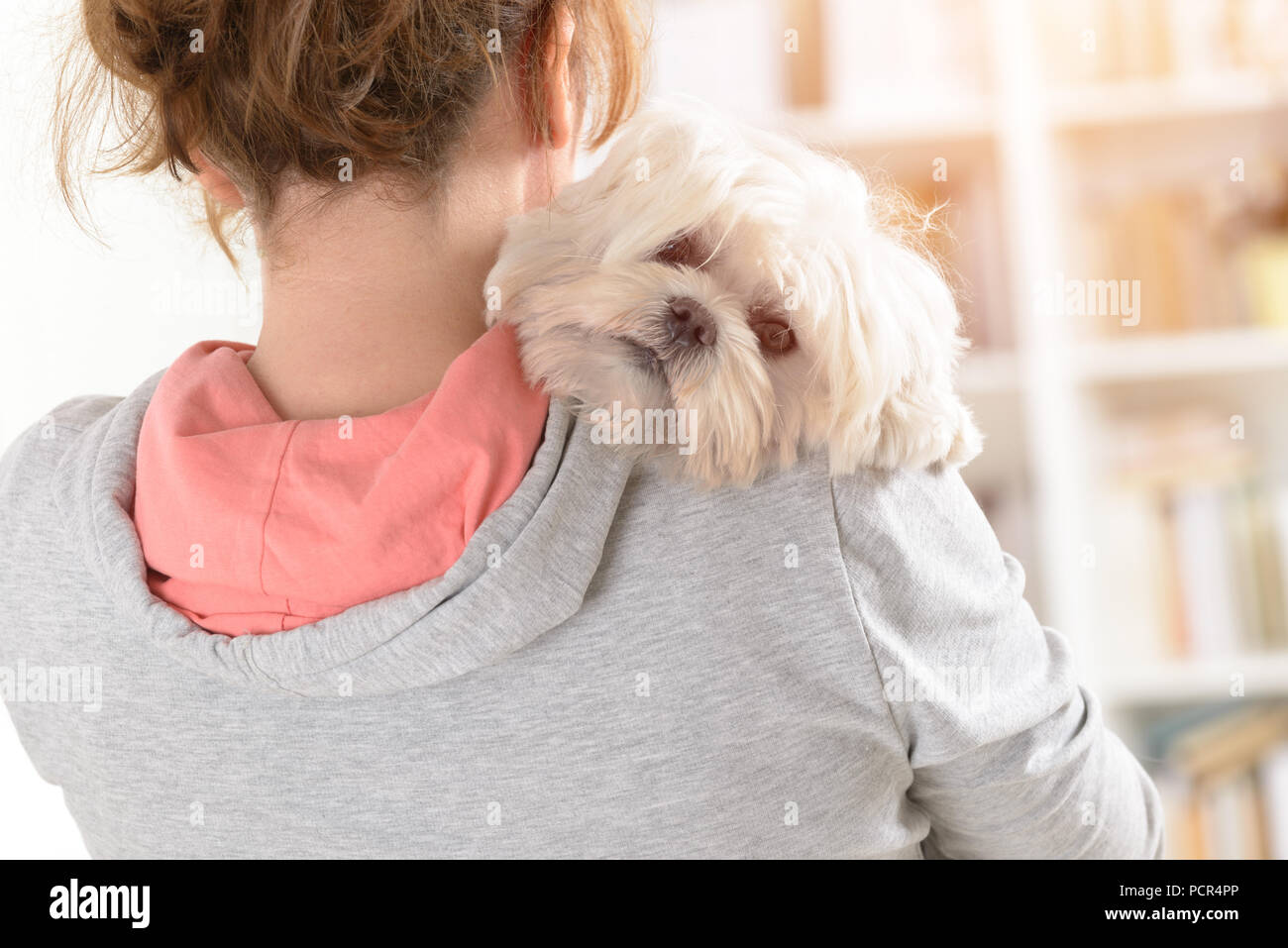 Woman holding a cute white Maltese dog on his shoulder. - Stock Image