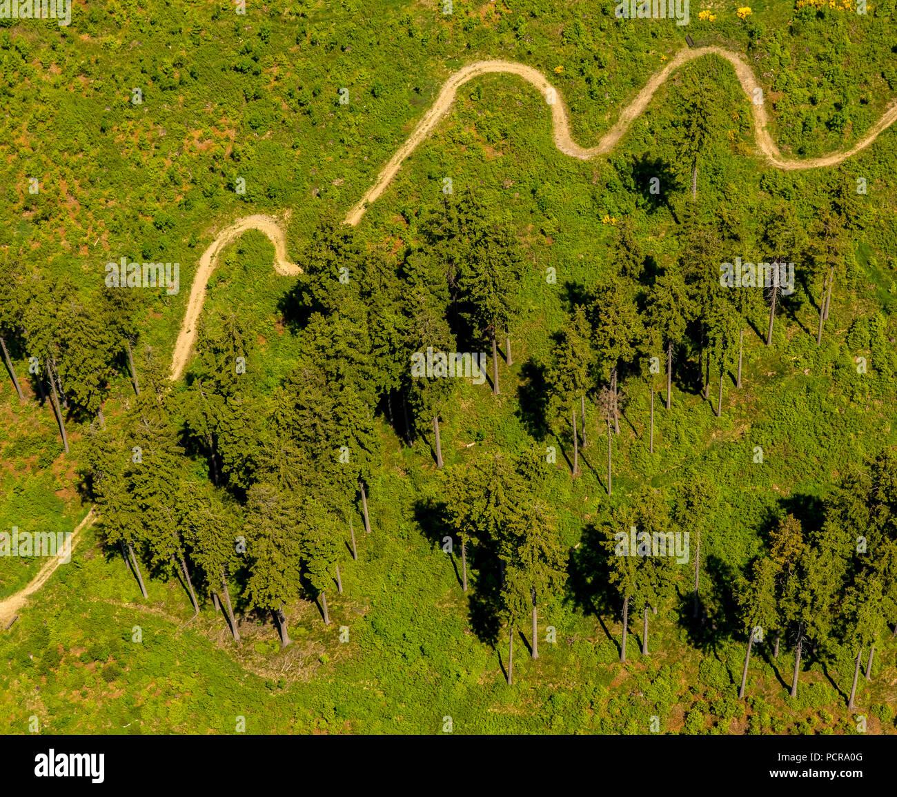 winding path, meadow, conifers, spruce, looped mountain path at the Hochheidehütte in Niedersfeld, Rothaar Mountains, Winterberg, Hochsauerland, North Rhine-Westphalia, Germany - Stock Image