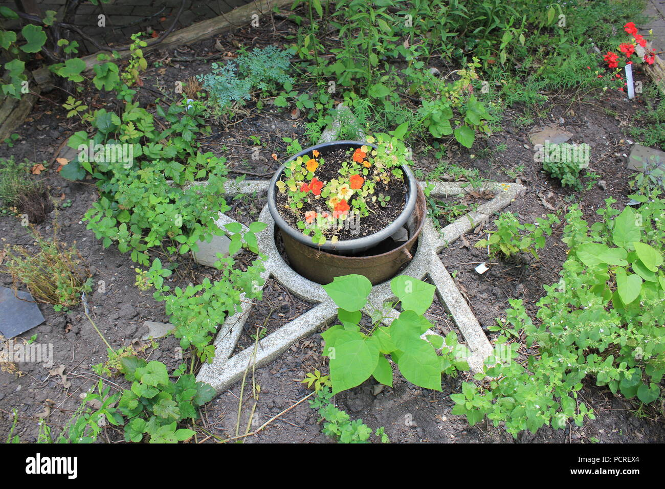 Pentagram polygon as a garden decoration at the Kennicott Grove in suburban Glenview, Illinois on a summer day. - Stock Image