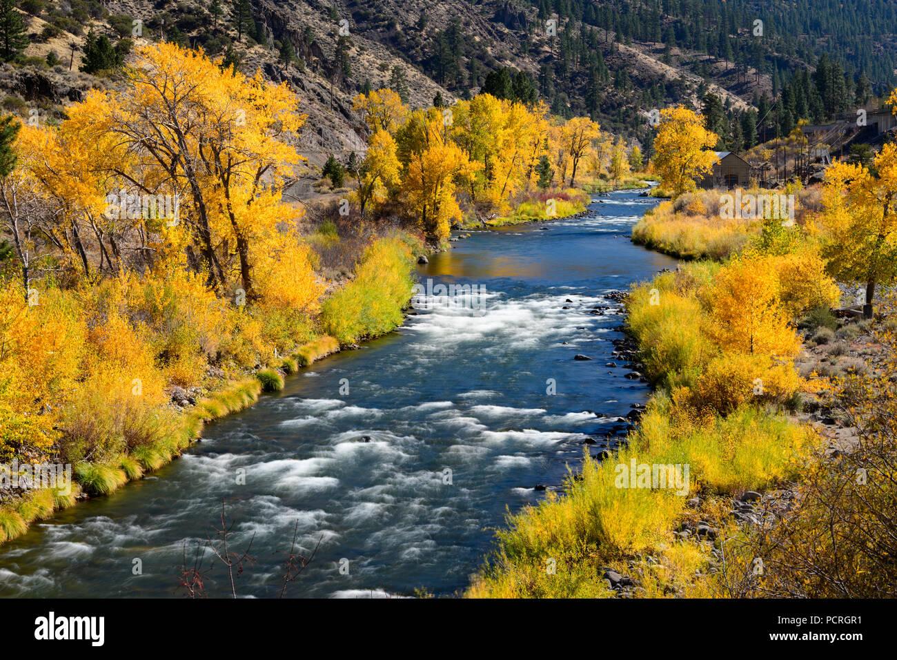 Fall color along the Truckee River near Reno, Nevada 2018. - Stock Image