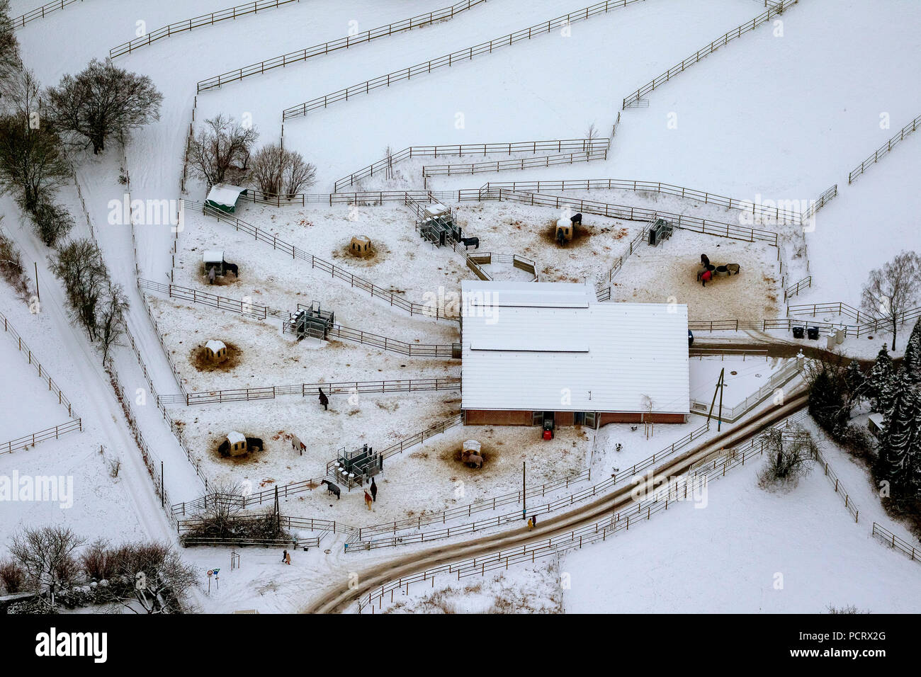 Aerial view, Horses in the snow, stables Hufotel GmbH, Essen, Ruhr area, North Rhine-Westphalia, Germany, Europe - Stock Image