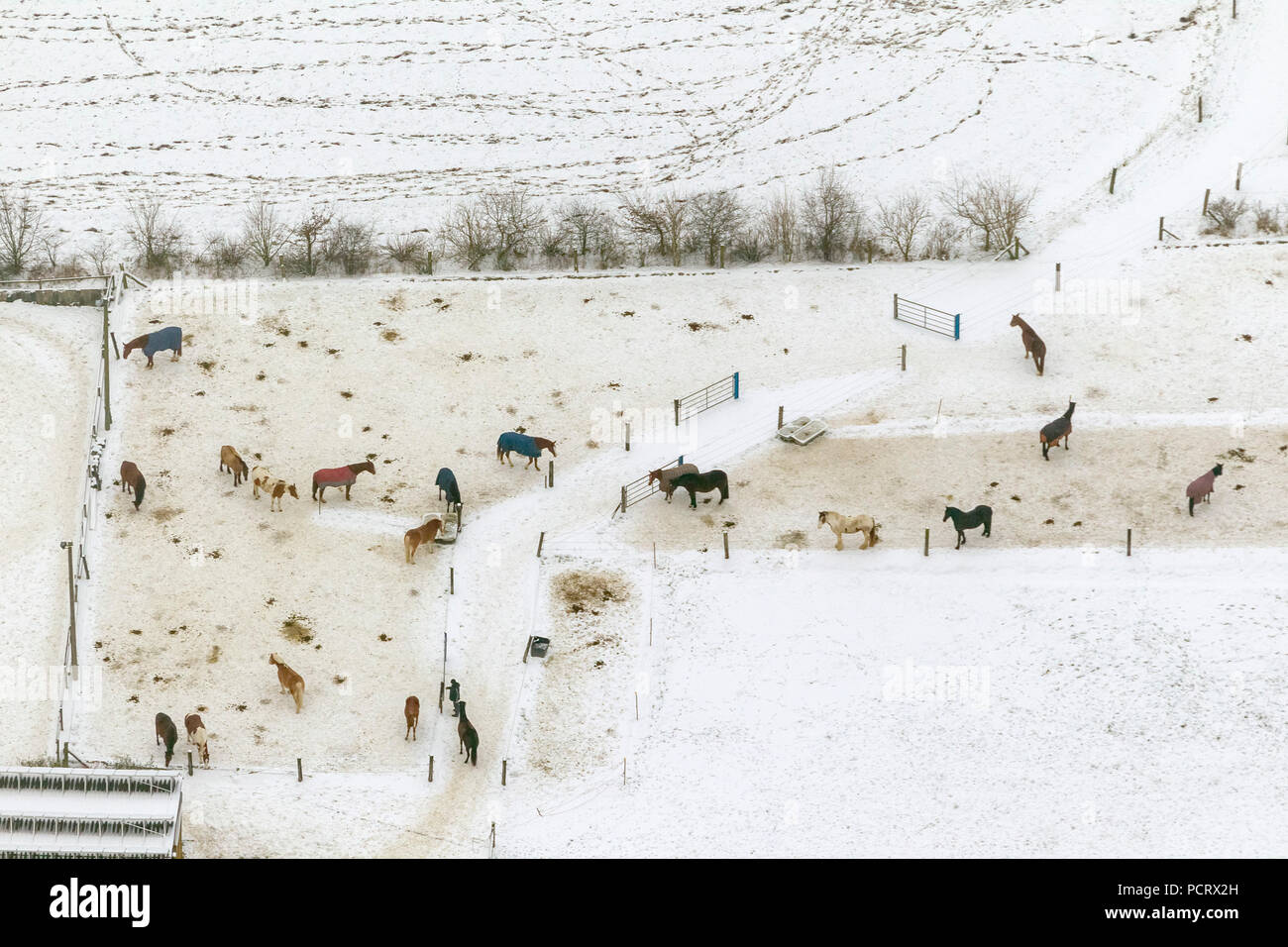 Aerial view, Horses in the snow, Essen-Kettwig, stables Laupendahler country road, paddock, Essen, Ruhr area, North Rhine-Westphalia, Germany, Europe - Stock Image