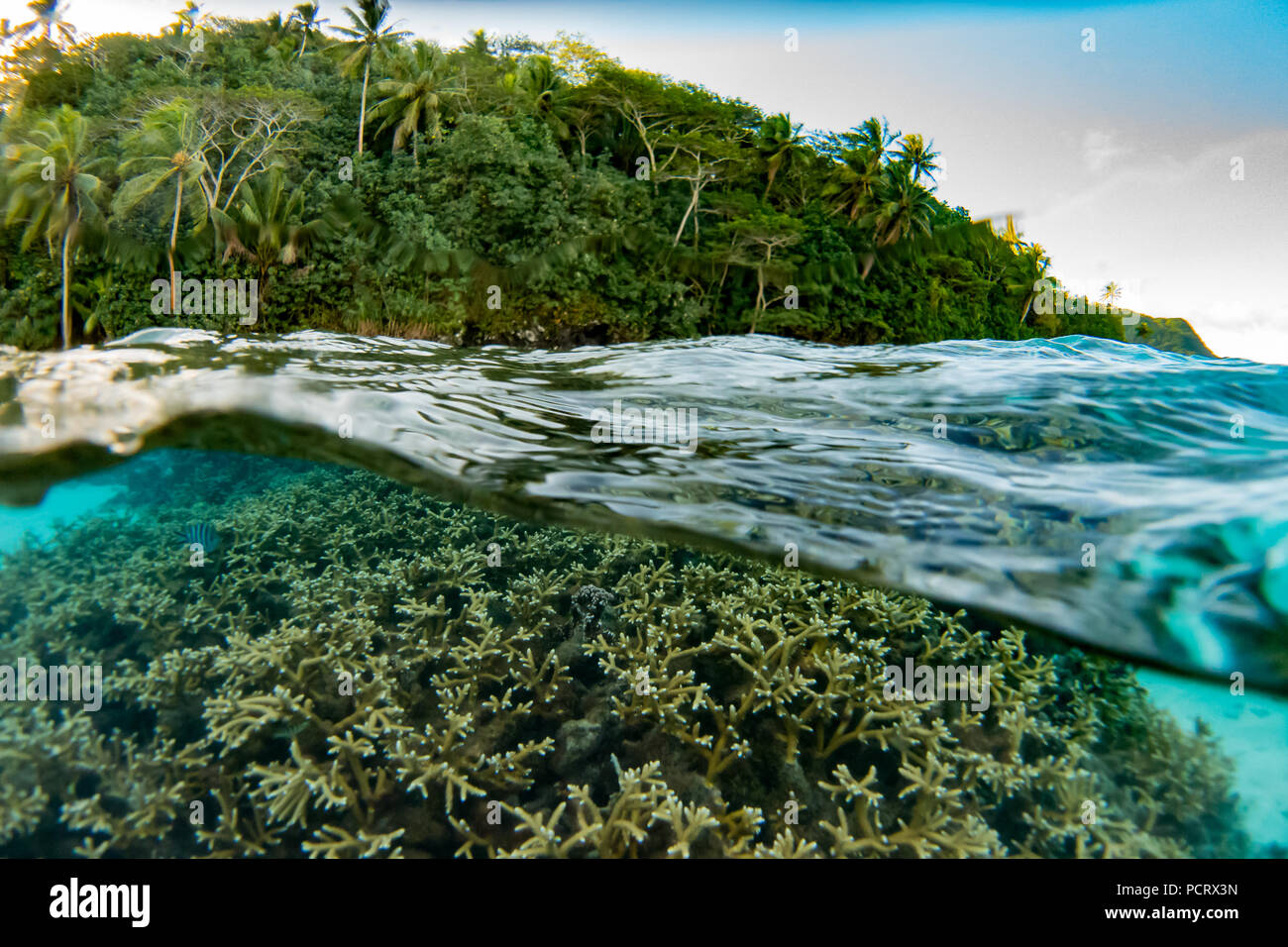 Snorkeling inside the lagoon at Huahine, French Polynesia - Stock Image