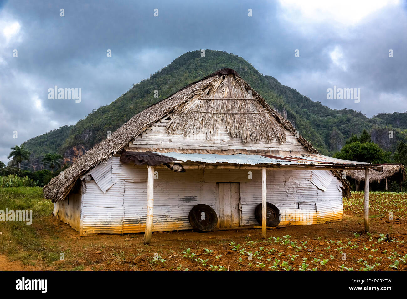 Dry barn for tobacco leaves in Vinales valley with hills, Viñales, Cuba, Pinar del Río, Cuba, Travel, Island, Greater Antilles, Stock Photo