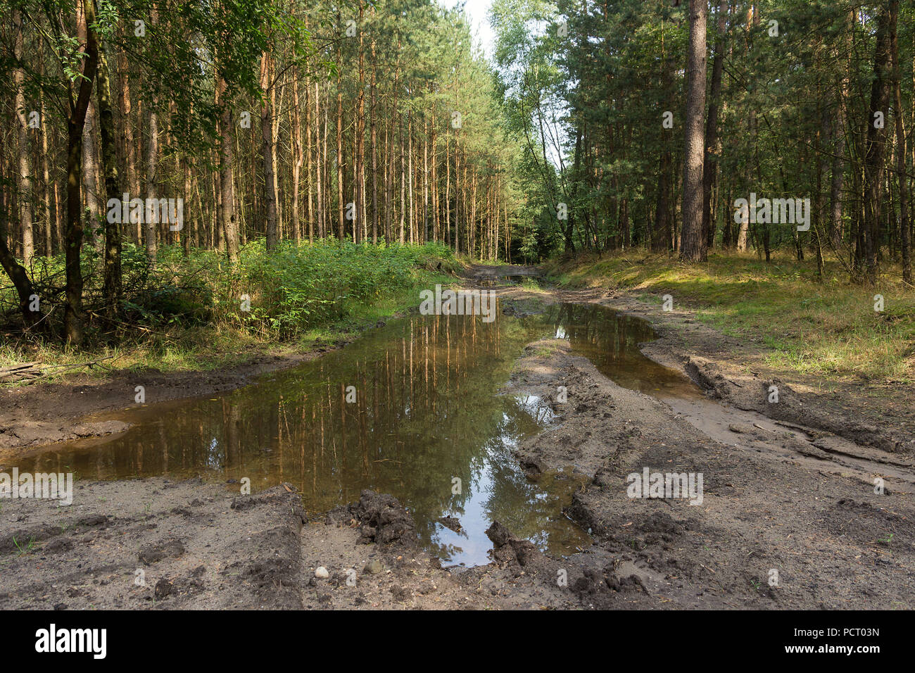 Land Brandenburg, muddy forest road, puddle - Stock Image