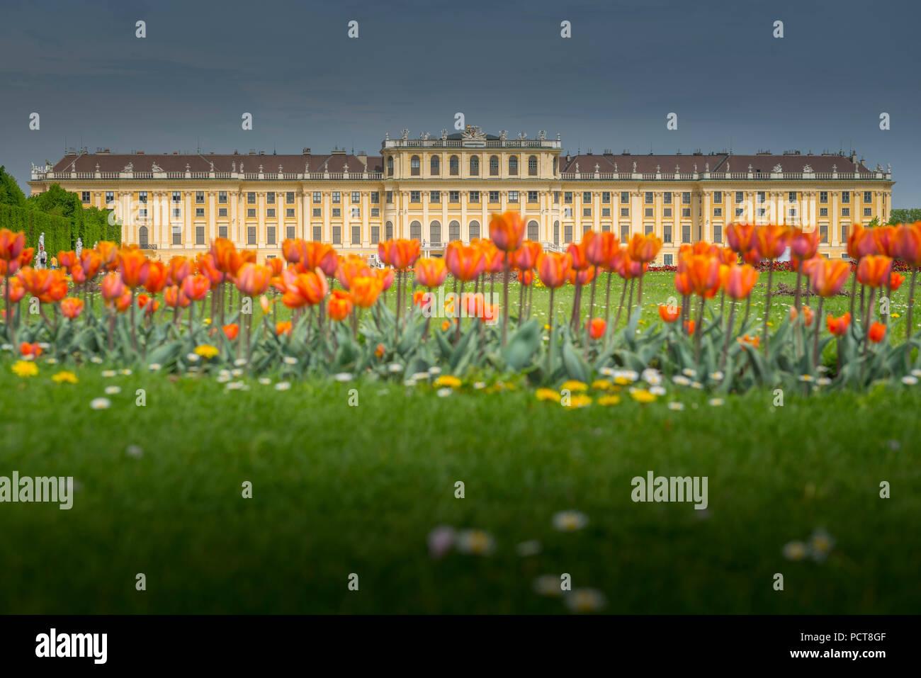 Europa, Österreich, Wien, Schloss, Palast, Schönbrunn, Vienna, Austria, architecture, capital - Stock Image