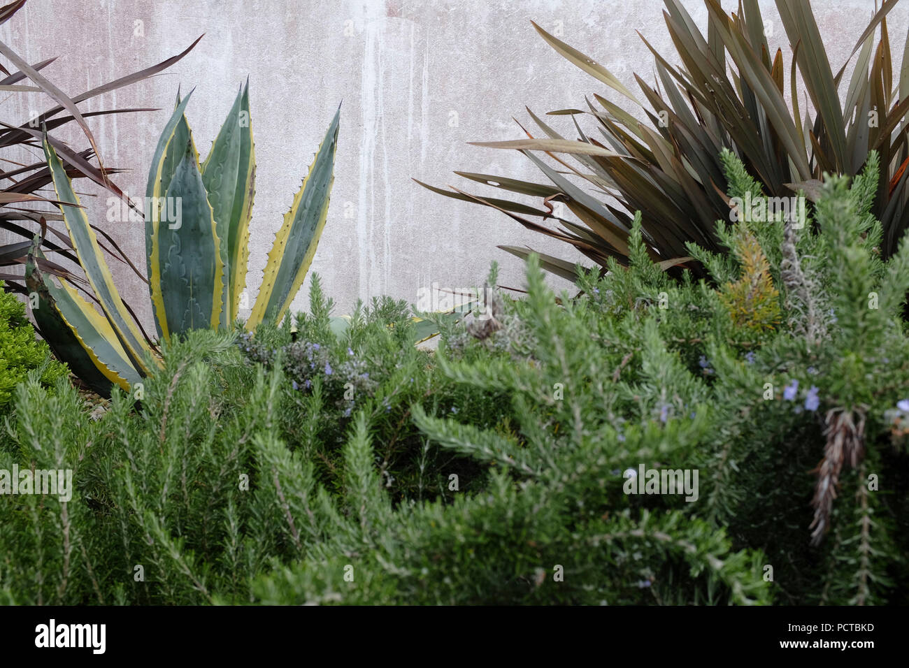 Plants in the front yard - Stock Image