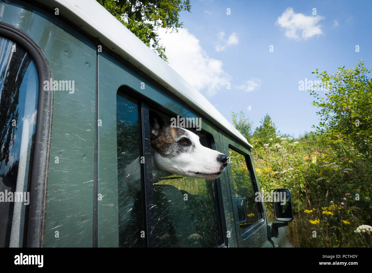 Dog looking out of window of off-road vehicle, close-up - Stock Image