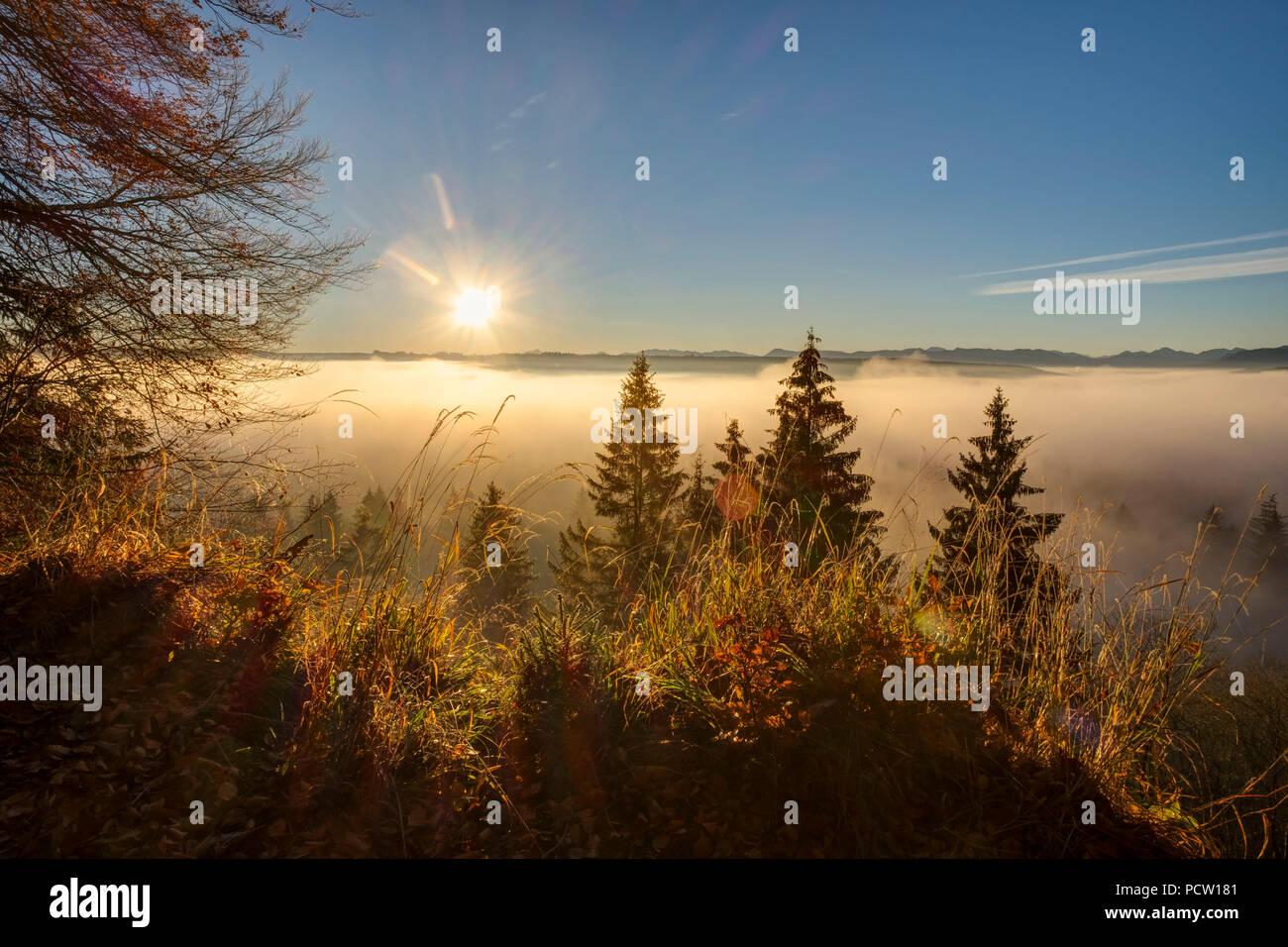 Morning mist, White Wall at Icking, Pupplinger Au, Upper Bavaria, Bavaria, Germany - Stock Image