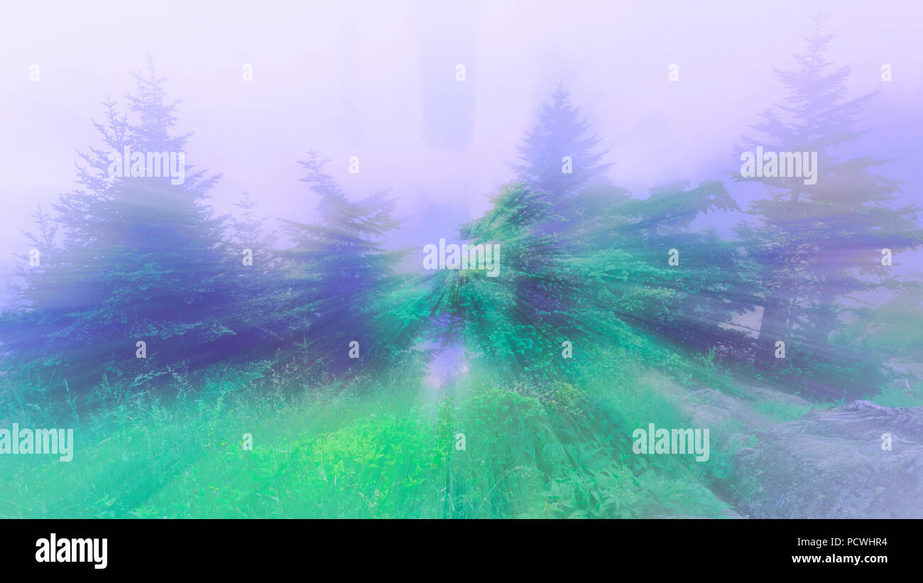 An abstract filtered psychedelic forest scene. - Stock Image