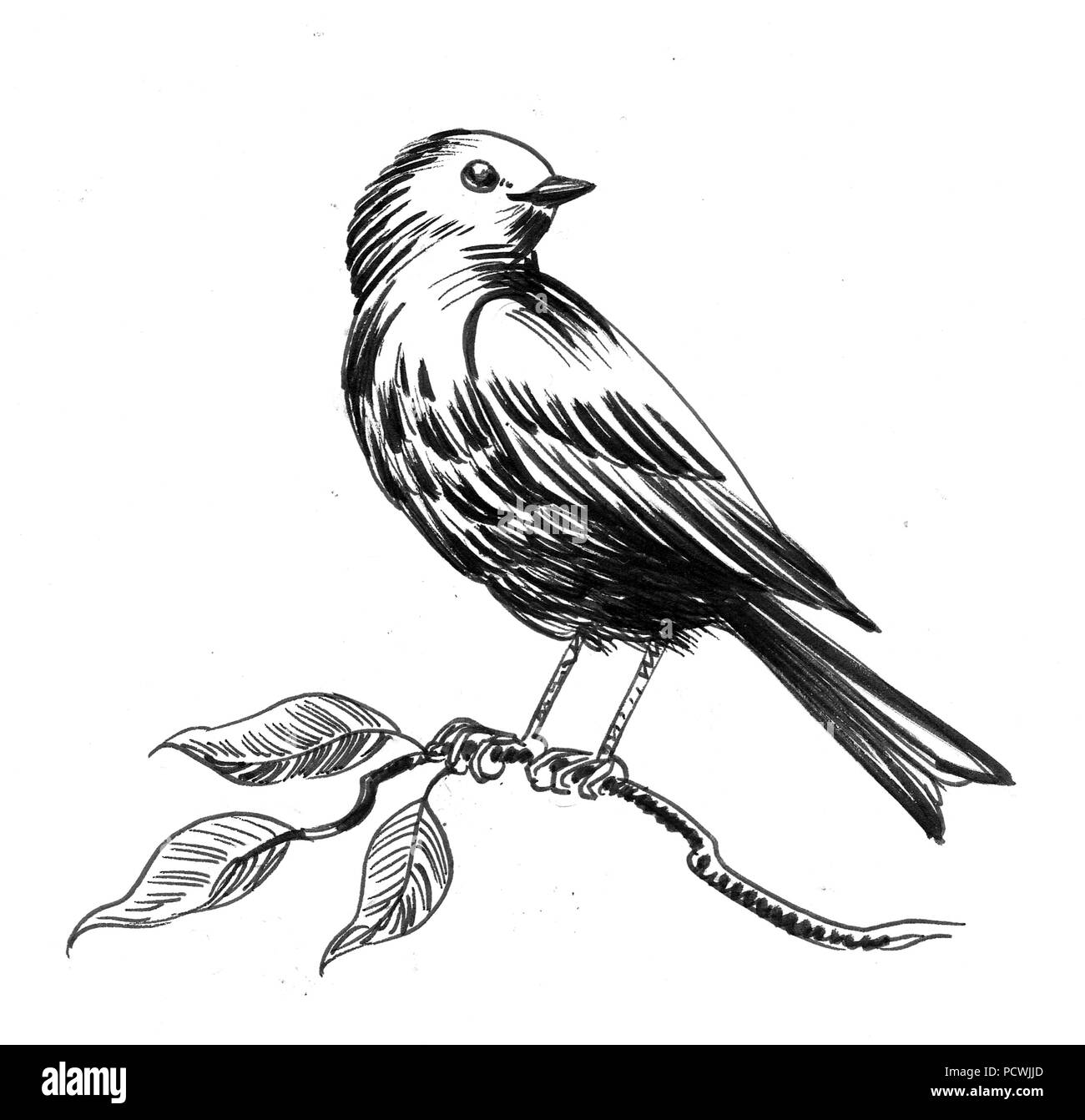 Bird Sitting On A Tree Branch Ink Black And White Illustration Stock Photo Alamy