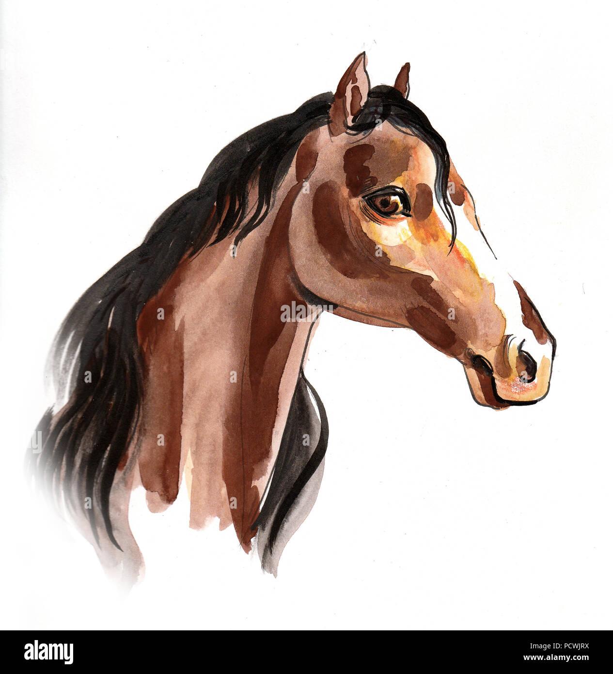 Watercolor Horse Head Stock Photo Alamy
