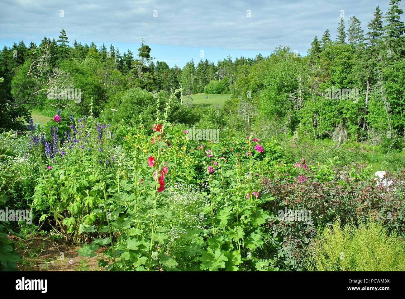 A view from Green Gables House area on Green Gable Golf Course, Cavendish, Prince Edward Island, Canada. - Stock Image