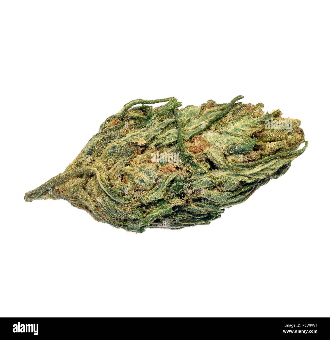 Marijuana on macro. - Stock Image