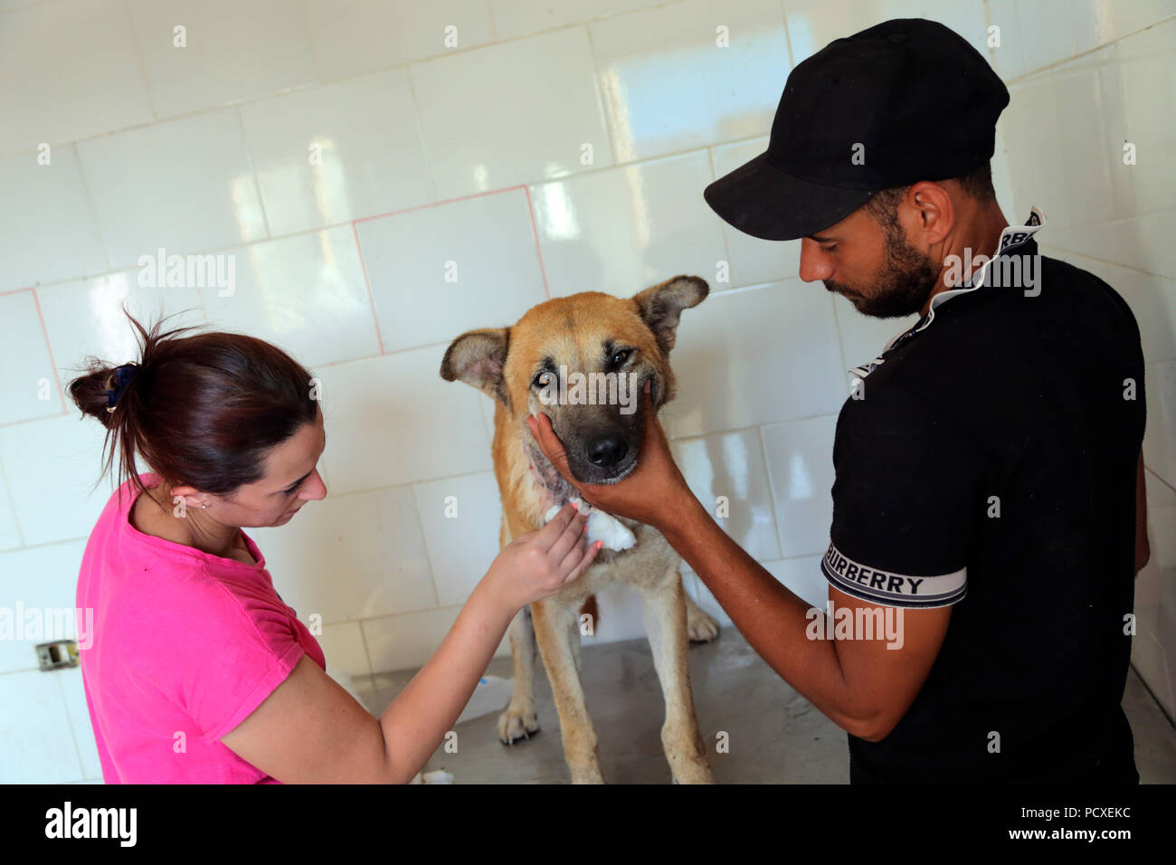 Mangy Dog High Resolution Stock Photography And Images Alamy