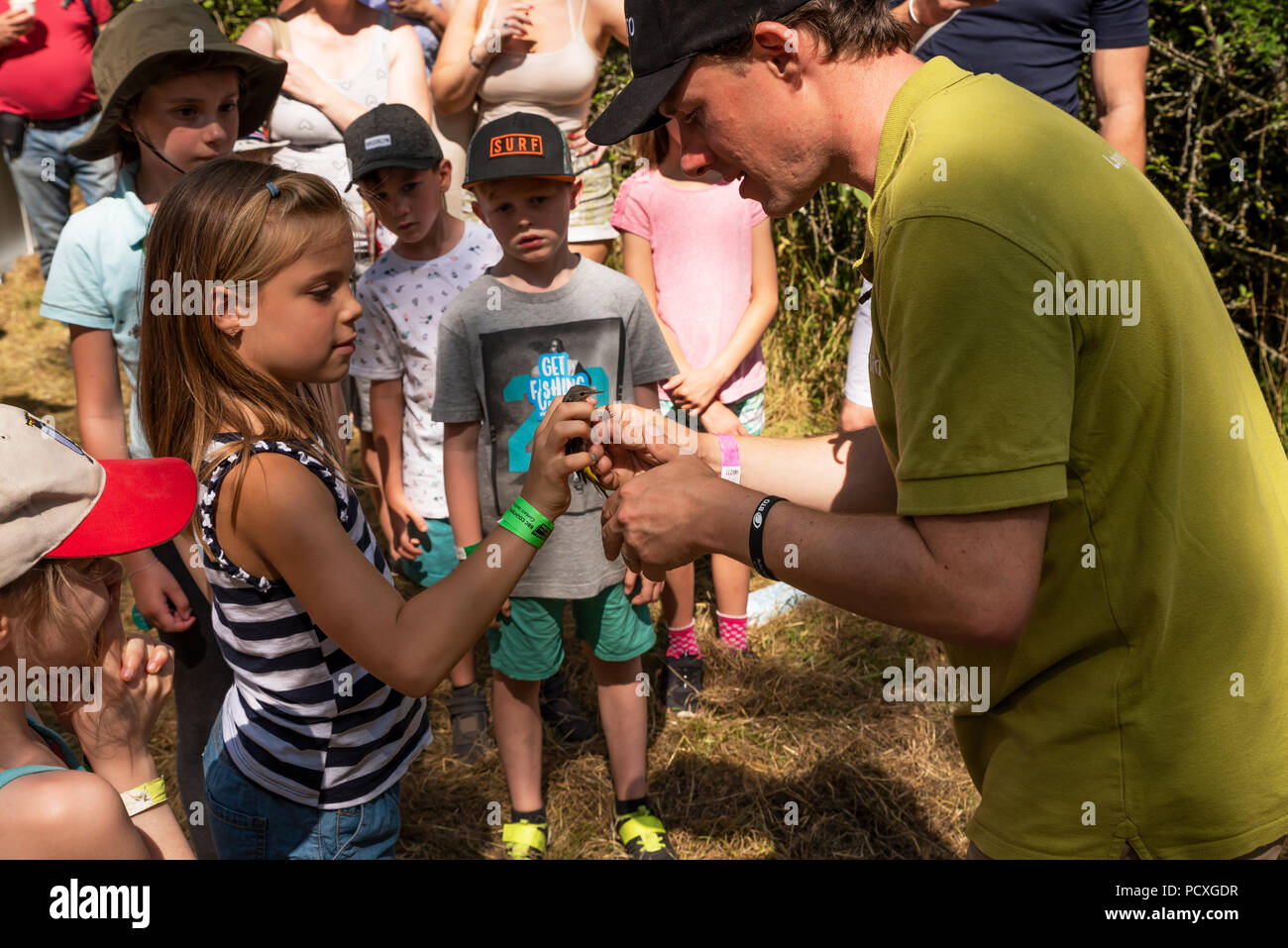 Woodstock, UK, 4th August 2018. Visitors flocked to BBC Countryfile Live, held within the grounds of Blenheim Palace. Animals, wildlife, food, outdoor sports, conservation, farming, rural affairs, entertainment, all were represented. A demonstration at the BTO stall on ringing, weighing and measuring a grey wagtail (motacilla cinereabto) before it was released by a young girl. Credit: Stephen Bell/Alamy Live News. - Stock Image