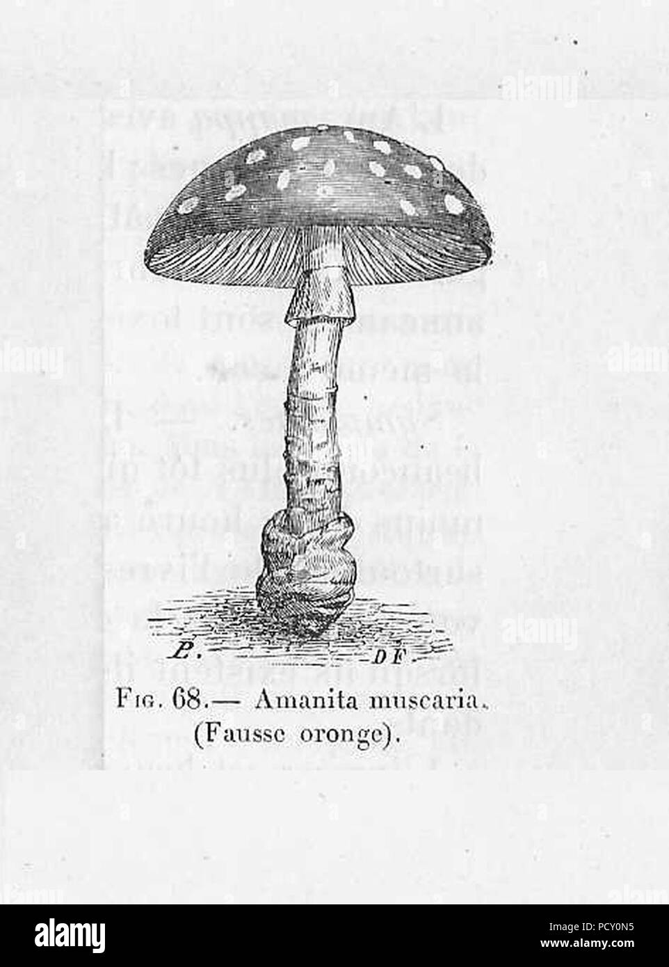 Amanite Tue Mouche Dessin Stock Photo Alamy