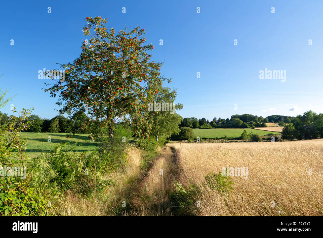 Typical Limousin landscape, France. - Stock Image