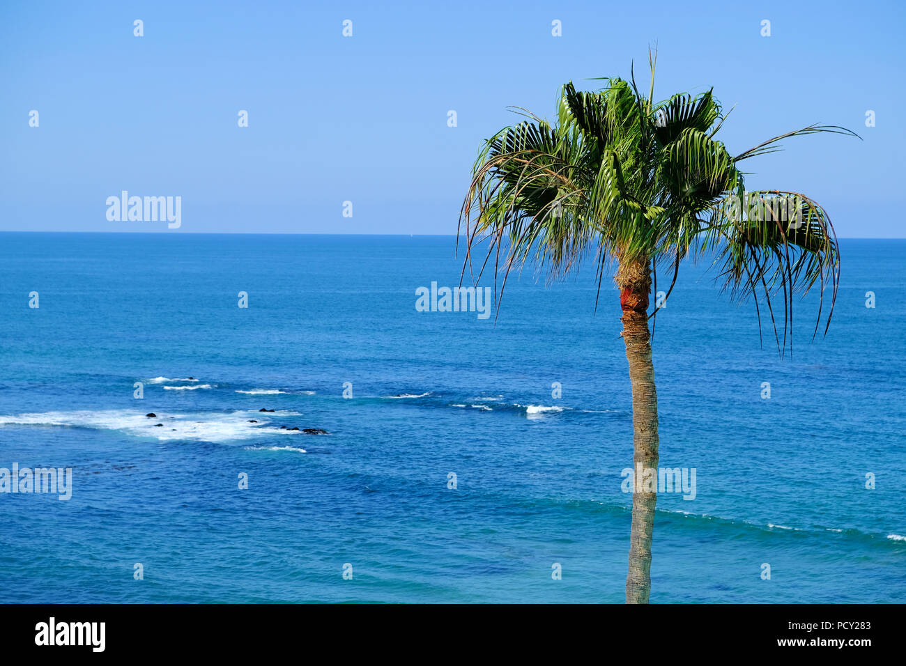 View of the Pacific Ocean and a single palm tree in Rosarito, Baja California, Mexico. - Stock Image