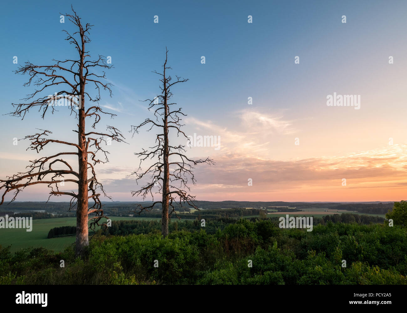 Two old trees with beautiful sunset at summer evening in Finland - Stock Image