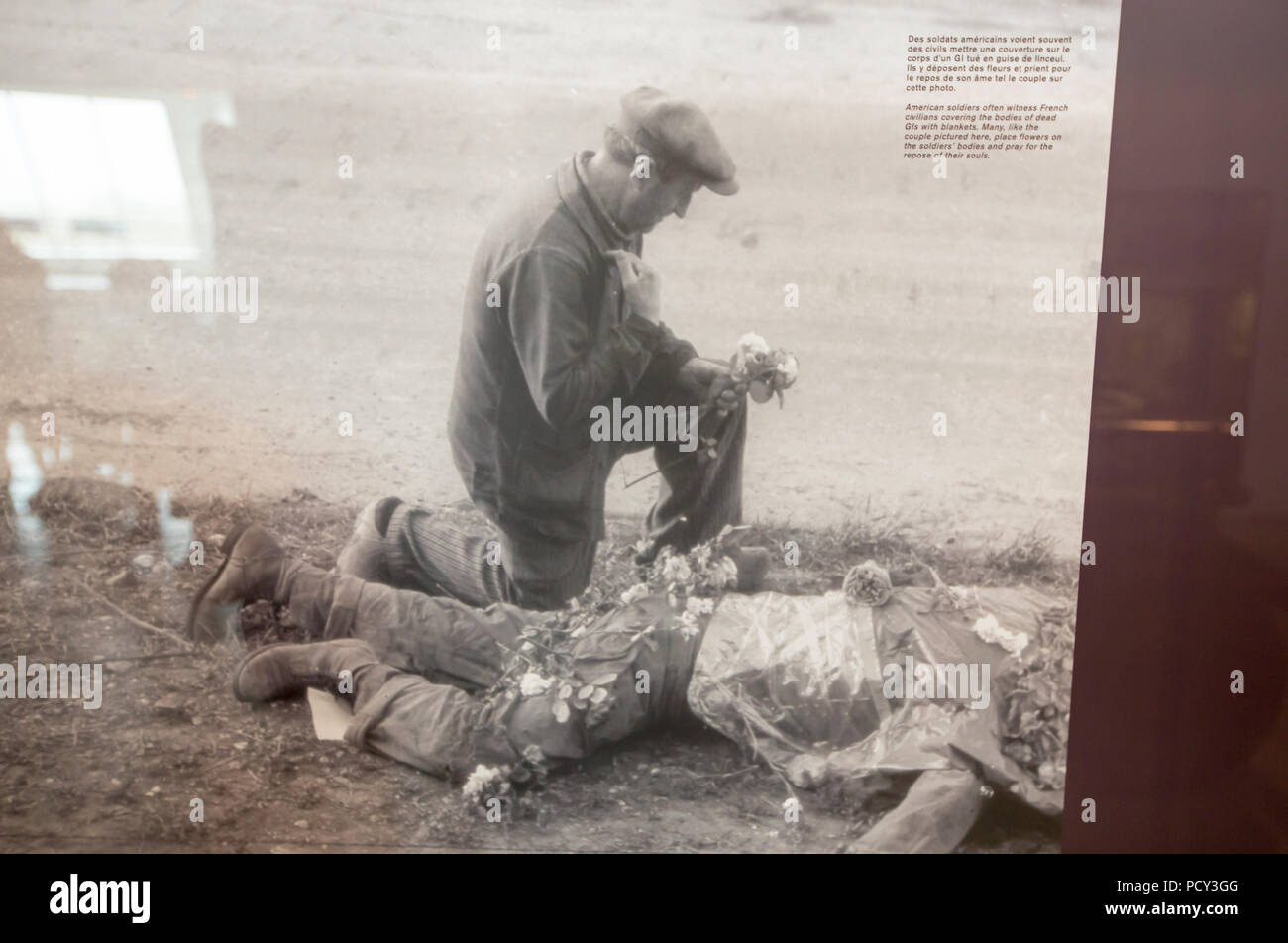A photo of a French person laying flowers on the body of a dead American soldier, as a mark of respect and thanks at the Utah beach D-Day museum, Norm - Stock Image