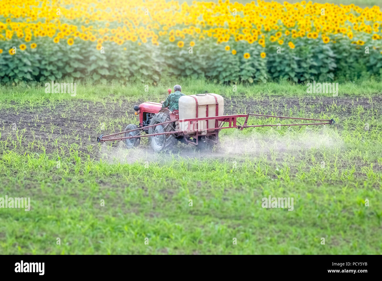 Man Spraying Pesticides Stock Photos Amp Man Spraying