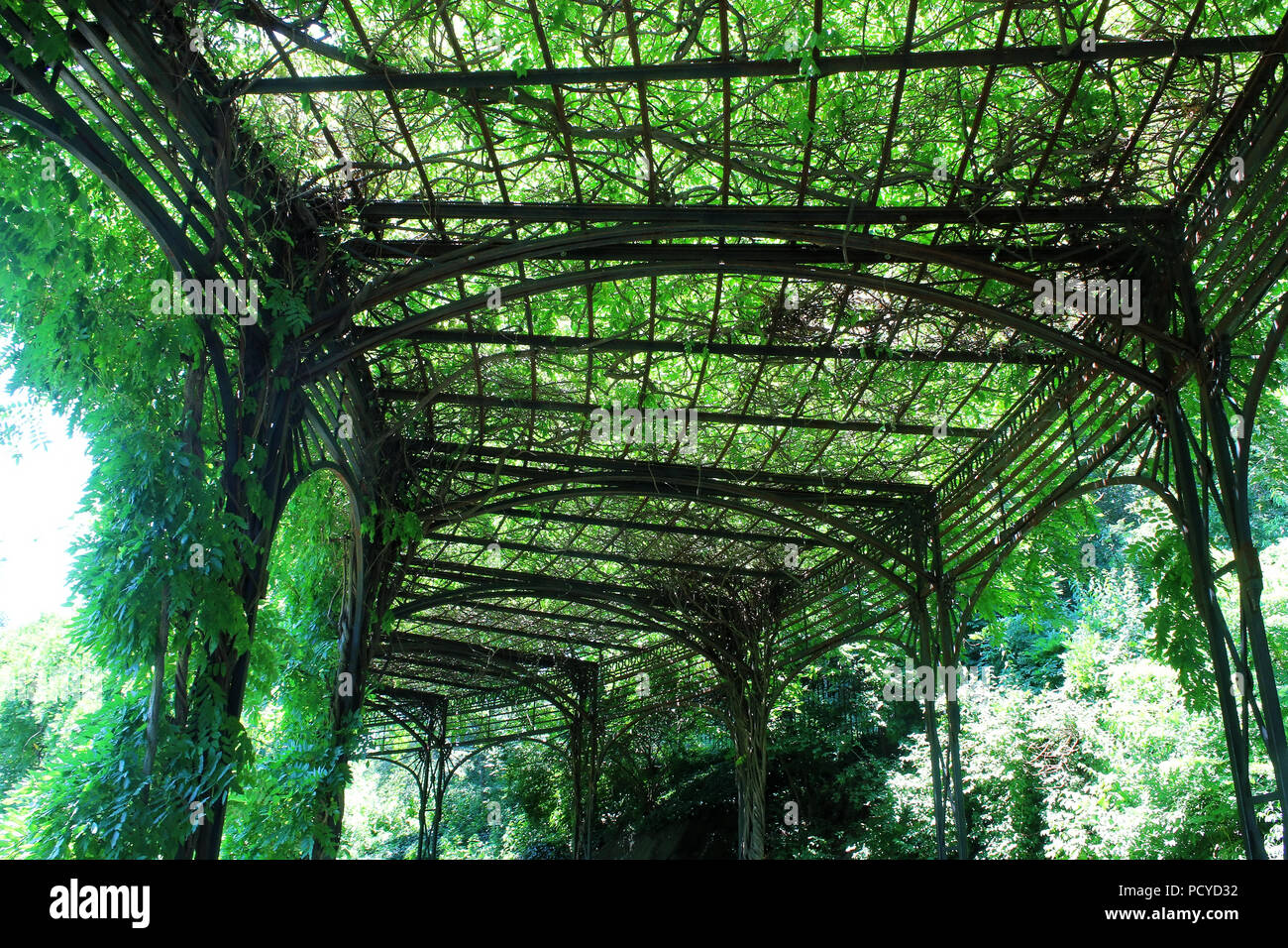 Wisteria pergola in the beautiful Conservatory Garden which is the only formal garden in Central Park, Manhattan on JULY 4th, 2017 in New York, USA. ( Stock Photo