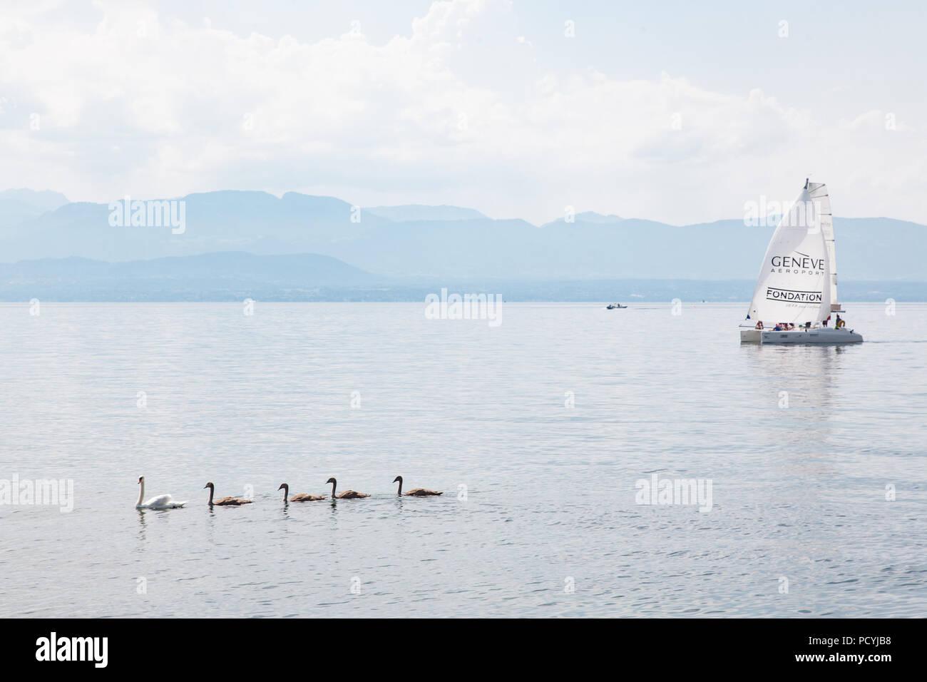 Wonderful sight of swans family with mother and four babies and yacht sailing on Geneva Lake (Lake Leman) near Rolle, La Cote region, Switzerland - Stock Image