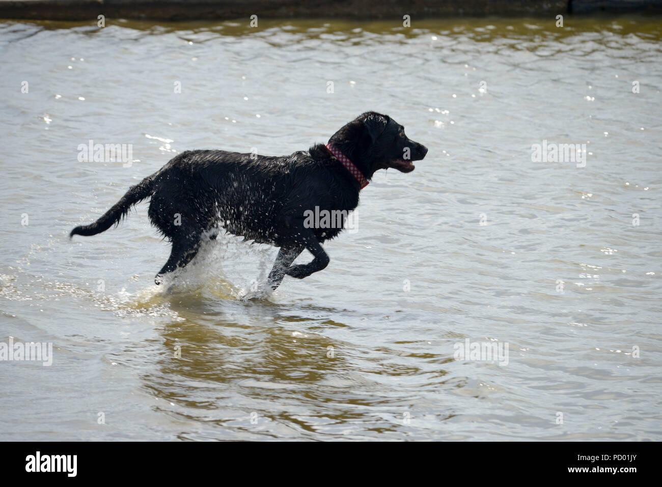 Dog making a splash in lake Stock Photo