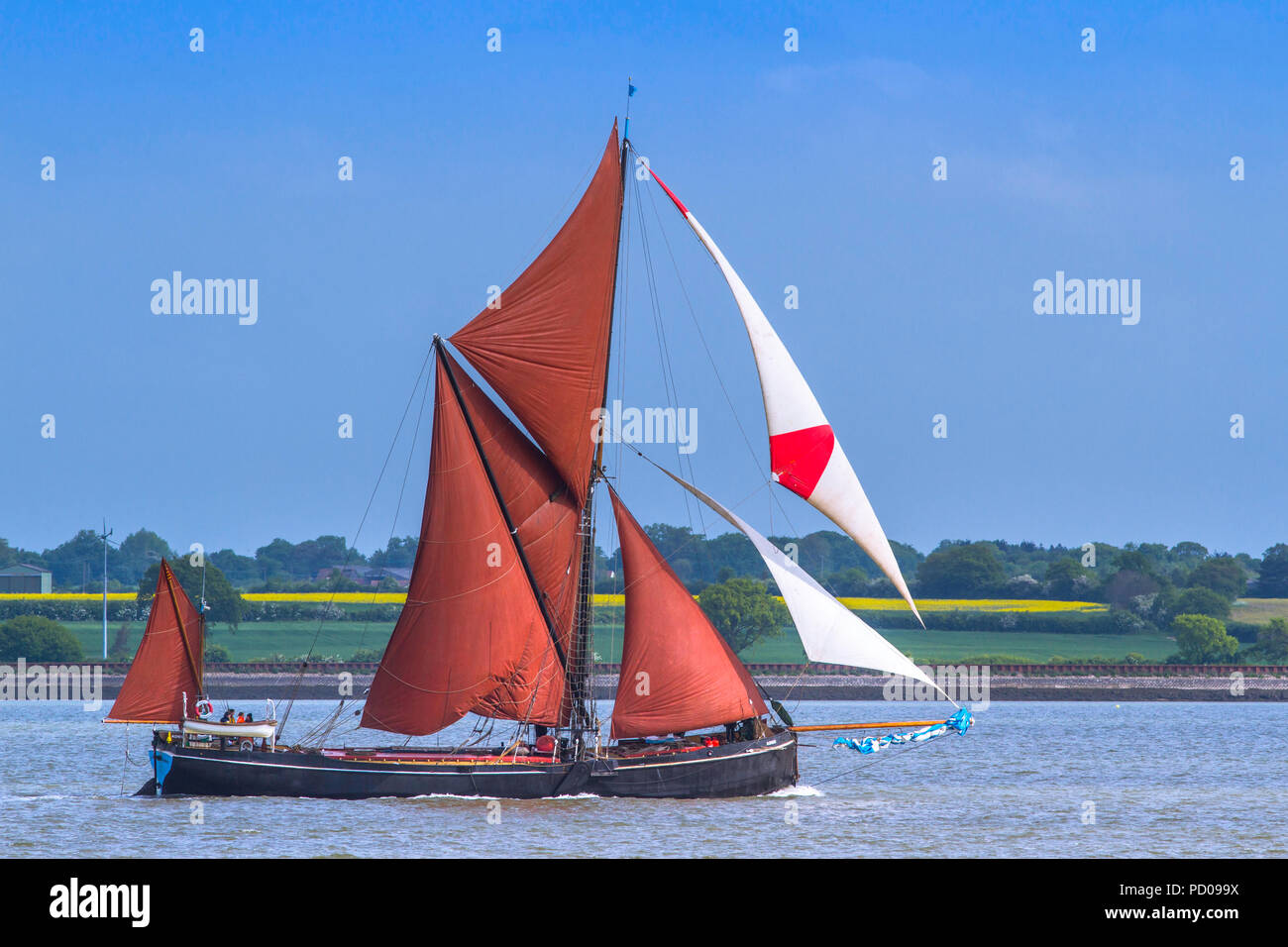 Thames Barge Adieu heads down the Blackwater estuary. - Stock Image