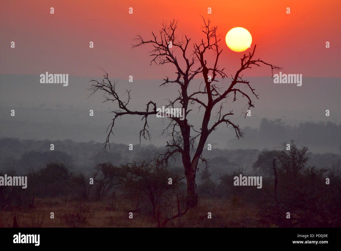 South Africa, a fantastic travel destination to experience third and first world together. Hazy red sunrise in Kruger Park. Smoky sky. - Stock Image
