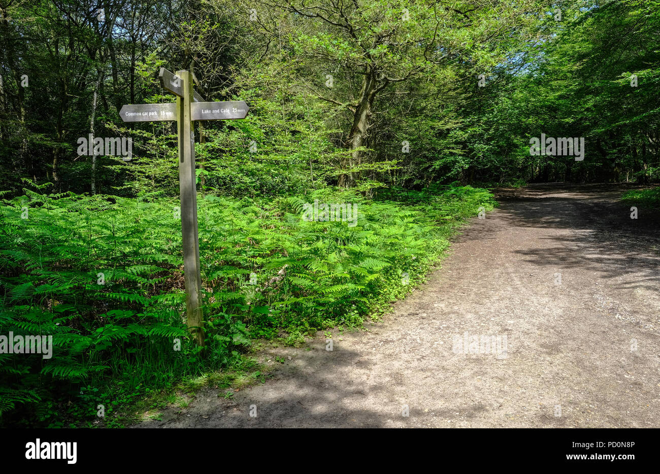 Wooden signpost in a patch of ferns beside a forest path.  Shot in Essex, Uk. - Stock Image