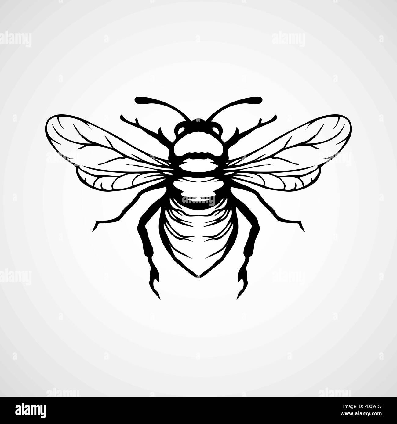 Vector engraving illustration of honey bee on white background - Stock Image