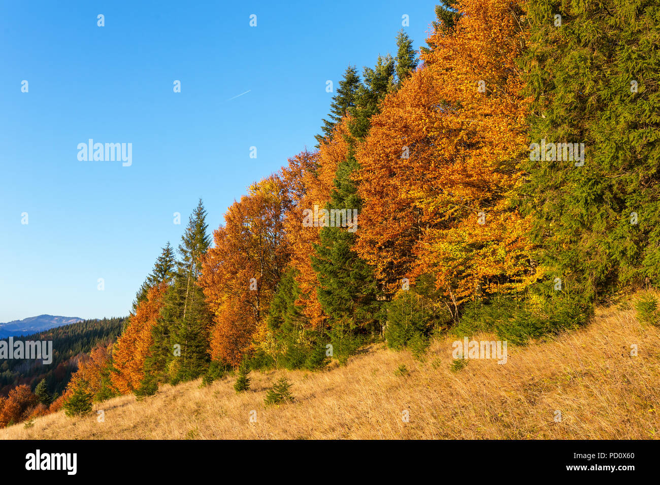Beautiful colorful sunset scene with autumn trees in Carpathian mountains, Ukraine. Red, yellow and green autumn leaves at sunrise light Stock Photo
