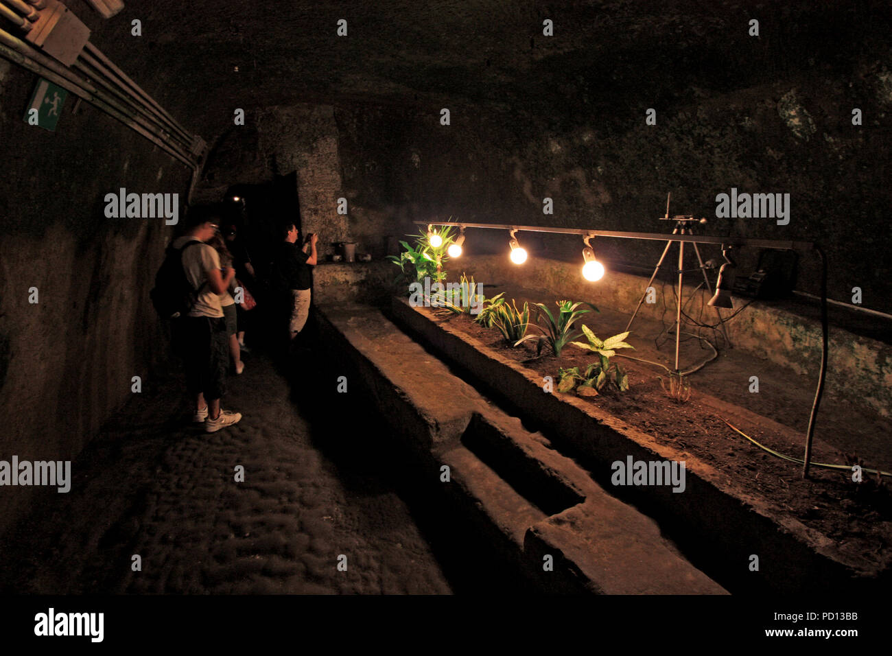 Plant breeding in the underground of Napoli, Italy, as a demonstration, how people survived in these tunnels during WWII Stock Photo