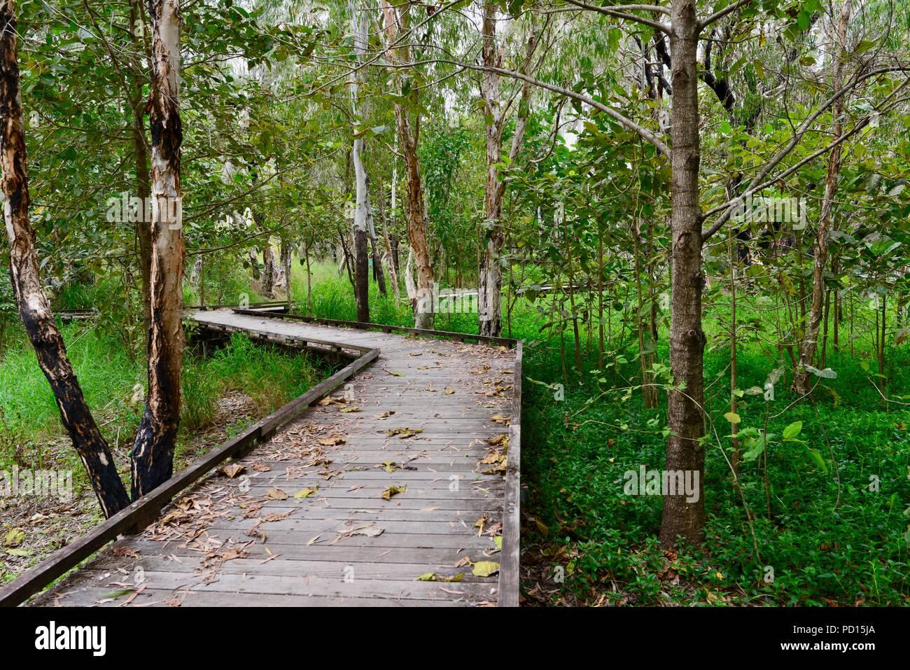 Boardwalk at Booroona walking trail on the Ross River, Rasmussen QLD 4815, Australia Stock Photo