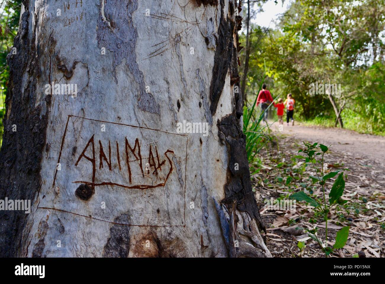 Tree with the word animals engraved into it, Booroona walking trail on the Ross River, Rasmussen QLD 4815, Australia - Stock Image