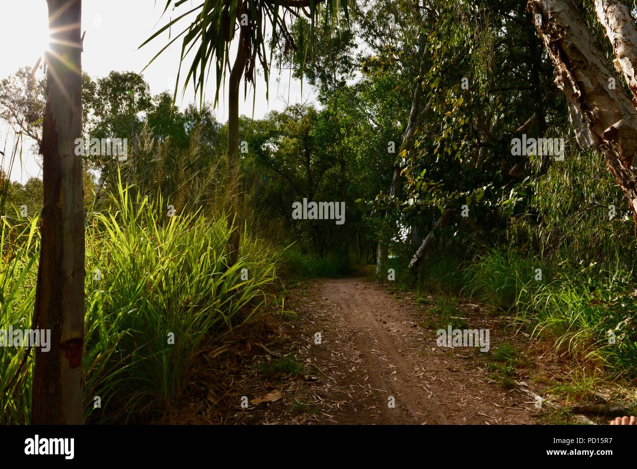 Booroona walking trail on the Ross River, Rasmussen QLD 4815, Australia Stock Photo