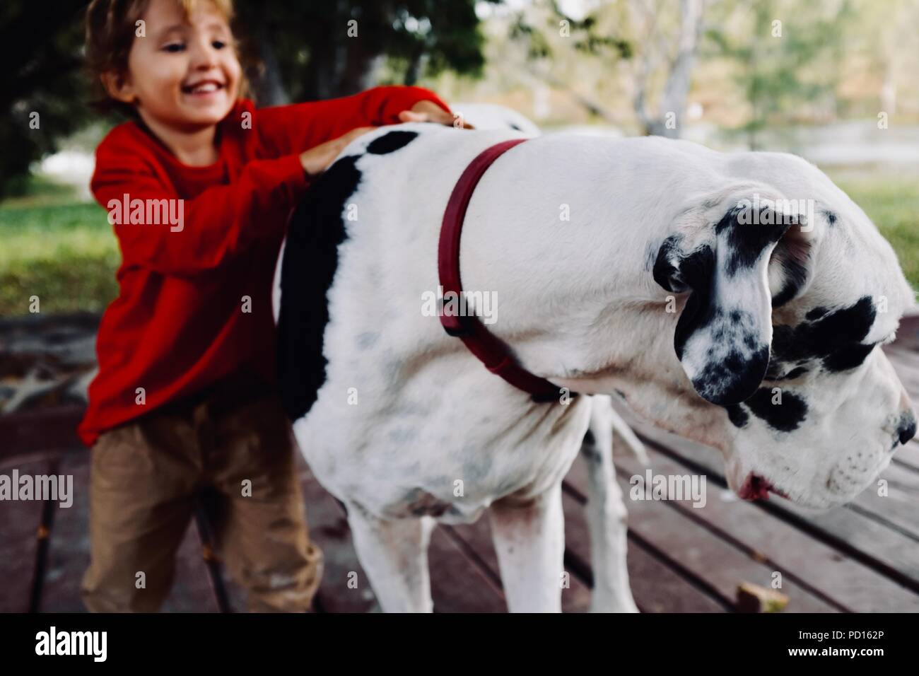 A young girl cuddles and smiles with a white and black great dane dog, Booroona walking trail on the Ross River, Rasmussen QLD 4815, Australia - Stock Image