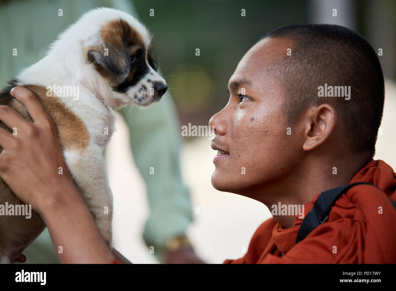 A smilling young Buddhist monk plays with a two-month old puppy in the monastery where he lives. In Siem Reap, Cambodia. - Stock Image