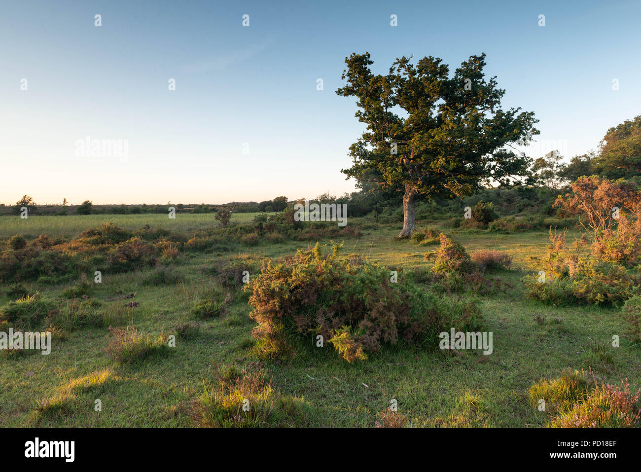 The trees and heathland of the New Forest National Park help provide a beautiful landscape from which to explore further. Taken near the village of Br Stock Photo
