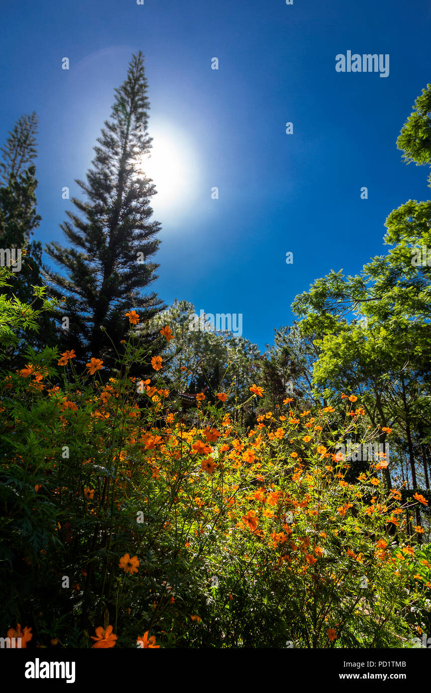 Blue sky and contrasty flowers in the monestary in Dalat, Thien Vien Truc, Buddhist Temple. - Stock Image