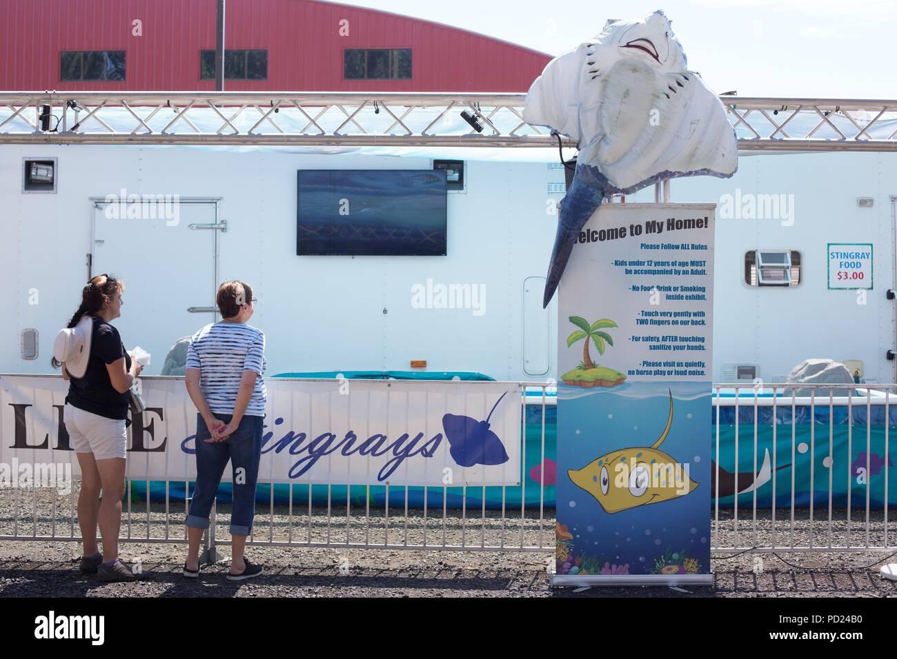 A live stingray encounter exhibit at the Benton County fair in Corvallis, Oregon, USA. - Stock Image