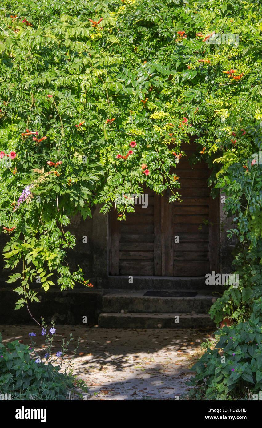 The Front Door Under The Tree Crown Stock Photo