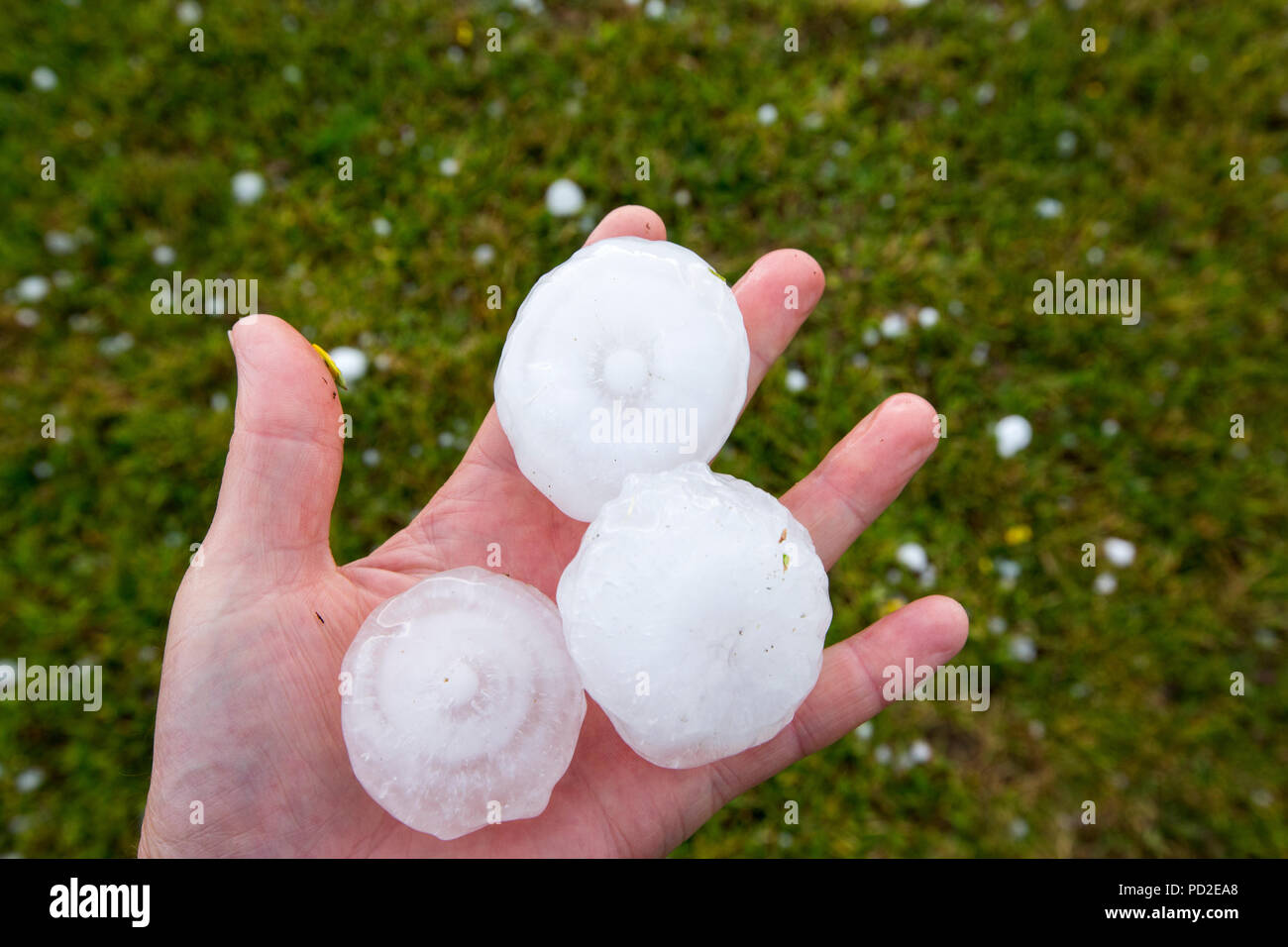 Hailstones from a thunderstorm over Chabanais, France, that turned the sky black and dropped hailstones between golf ball and tennis ball in size. Suc Stock Photo