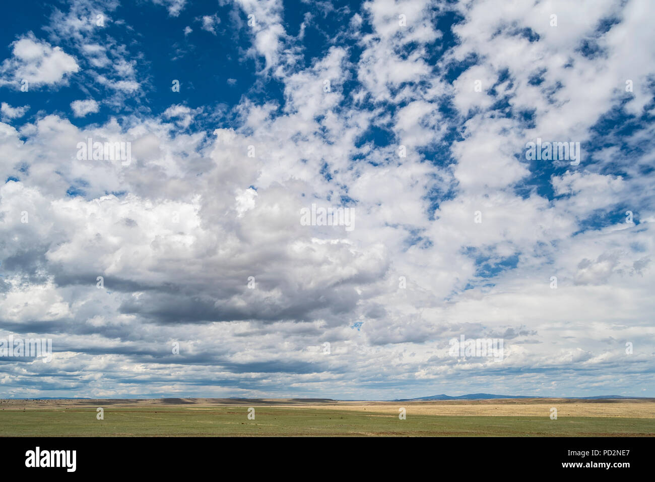 Scattered cumulus clouds, summer, Mora County, NM, USA, by Dominique Braud/Dembinsky Photo Assoc - Stock Image
