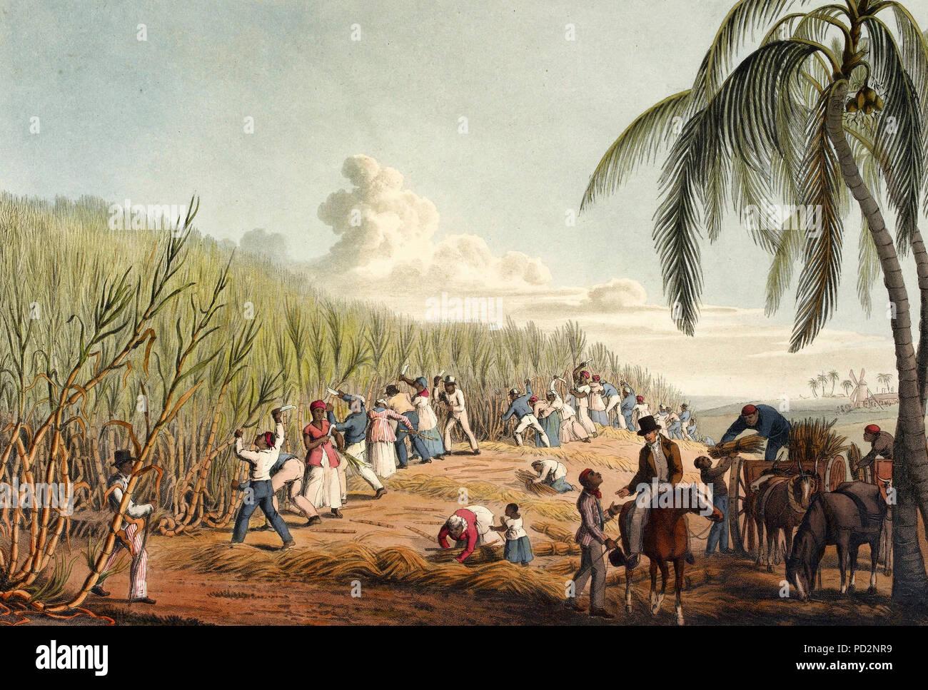 Slaves cutting the sugar cane on Antigua - William Clark, 1823
