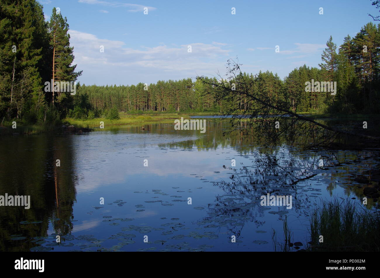 A beautiful and calm lake in the forests of Dalarna in Sweden - Stock Image